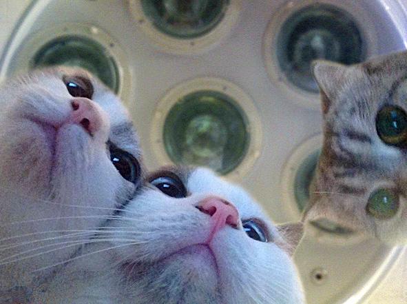 kat-kons.jpg