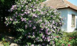 Хоббиты любят выращивать цветы у своих домиков