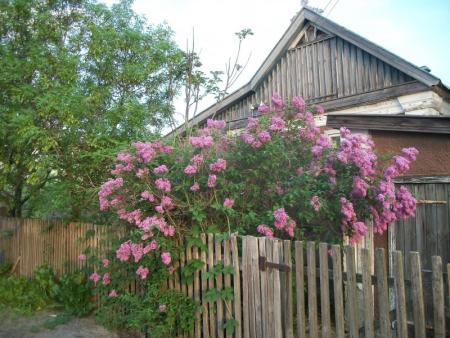 Дома хоббитов утопают в цветах